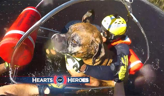 BELFOR-Hearts-of-Heroes-Episode-22-Heli-Dog-Rescus